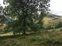 Härligt träd i natur field treen Arkivfoton