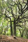 Härligt träd i NZ som reser Arkivfoton