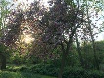 Härligt träd i solnedgången Royaltyfri Bild