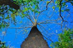 Härligt träd i tät skog med unikt perspektiv Arkivfoton
