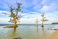 Härligt träd- och havsvatten Arkivbild