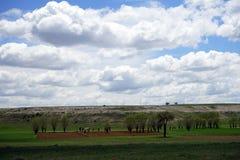 Härligt träd på den plogade jorden Fotografering för Bildbyråer