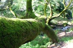 Härligt träd som täckas i Moss Close Up Royaltyfri Foto