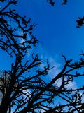 Härligt trädanseende mot ljus blå himmel Royaltyfri Foto