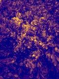 Härligt trädblad eller att lämna illustration dekorativa växter i rummet och trädgården royaltyfria foton