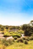Härligt träsk i savannet serengeti Fotografering för Bildbyråer