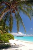 härligt tropiskt för strand royaltyfria bilder