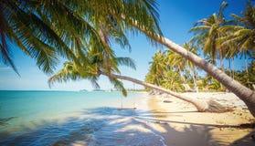 Härligt tropiskt landskap, turkosvatten, vit sand och palmträd på stranden royaltyfri fotografi