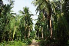 Härligt tropiskt paradis Royaltyfria Foton