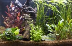 Härligt tropiskt planterat sötvattens- akvarium arkivbild