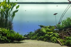 Härligt tropiskt sötvattens- akvarium med gröna växter och Fis arkivfoto