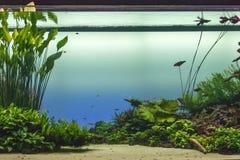 Härligt tropiskt sötvattens- akvarium med gröna växter och Fis royaltyfria foton