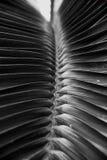 H?rligt tropiskt stort blad i moderiktig svart f?rg royaltyfri foto