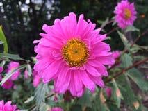 Härligt växa för blomma i landet royaltyfri bild