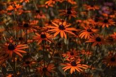 Härligt växa för blomma i sommarträdgården arkivfoton