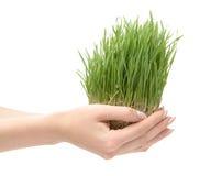 härligt växa för gräs Royaltyfri Fotografi