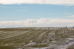Härligt vårfält i den insnöade Vitryssland Arkivfoton