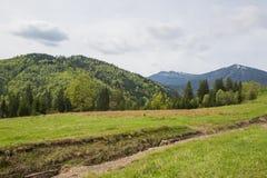 Härligt vårlandskap i Carpathians berg ukraine Arkivbild