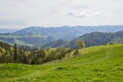 Härligt vårlandskap i Carpathians berg ukraine Royaltyfri Bild