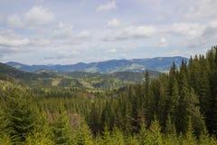 Härligt vårlandskap i Carpathians berg ukraine Arkivfoto