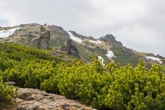 Härligt vårlandskap i Carpathians berg ukraine Arkivbilder
