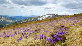 Härligt vårlandskap i Carpathians, Ukraina Royaltyfria Bilder
