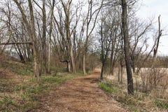 Härligt vårlandskap i skogen Arkivbild