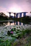 Härligt vatten Lily Flower Marina Bay Sunset Royaltyfria Bilder