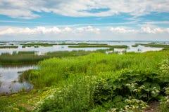 Härligt vatten och grönska för naturträskområde fotografering för bildbyråer