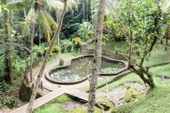 Härligt vattendamm med lilles i tropiskt land Royaltyfri Bild