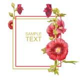 Härligt vattenfärgkort med röda blommor Malvaväxt som isoleras på vit bakgrund royaltyfri illustrationer