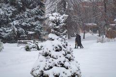 Härligt vinterfoto - träd som täckas med snö arkivbilder