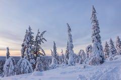 Härligt vinterlandskap från nordliga Finland royaltyfri fotografi