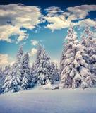 Härligt vinterlandskap i bergskog Arkivbilder