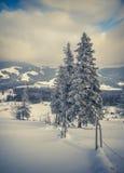 Härligt vinterlandskap i bergskog Arkivbild