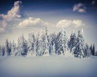 Härligt vinterlandskap i bergskogen Arkivbild