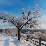 Härligt vinterlandskap med det frostade trädet Arkivbild