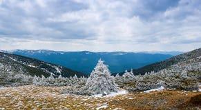 Härligt vinterlandskap med dold gran för snö Royaltyfria Bilder