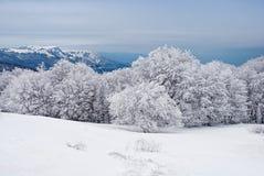 Härligt vinterlandskap med dolda träd för snö Royaltyfri Fotografi