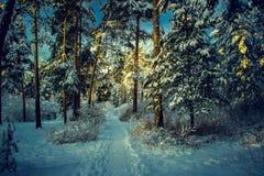 Härligt vinterlandskap med skogen, träd och soluppgång winterly morgon av en ny dag Jul landskap med snö arkivfoton