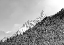 Härligt vinterlandskap med snö täckte träd, vintermontering Arkivfoton