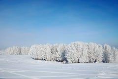 Härligt vinterlandskap med snöig trän Arkivbild