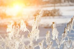 härligt vinterlandskap med snöväxten, träd och soluppgång winterly morgon av en ny dag lilavinterlandskap med solnedgång royaltyfria bilder