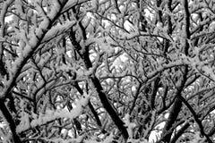 Härligt vinterlandskap - Sachsen, Tyskland Arkivfoto