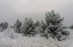 Härligt vinterlandskapgräs och träd i snö royaltyfri bild