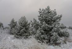 Härligt vinterlandskapgräs och träd i snö arkivfoto
