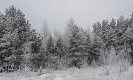 Härligt vinterlandskapgräs och träd i snö fotografering för bildbyråer