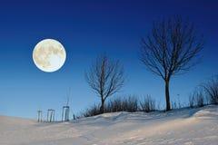 Härligt vinternattlandskap med den trädsilhouetes och fullmånen royaltyfria bilder