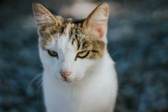 härligt vitt kattslut upp ståenden arkivfoto