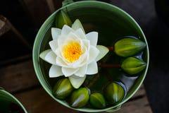 Härligt waterlily eller lotusblommablomma Fotografering för Bildbyråer
